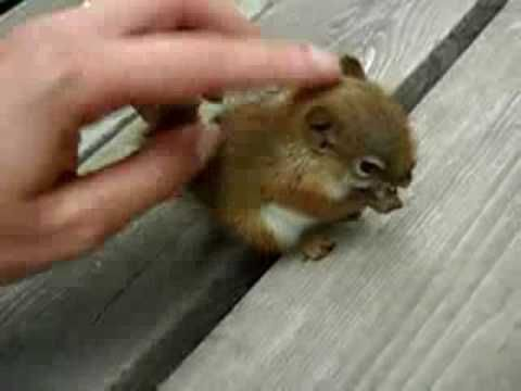 This is the cutest baby squirrel EVER! Annoying voice on the video, though.