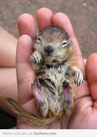 i can't resist tiny adorable animals