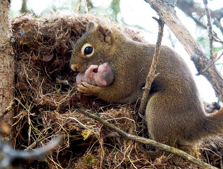 Cute Animal Parents | Photos of Mother and Baby Animals