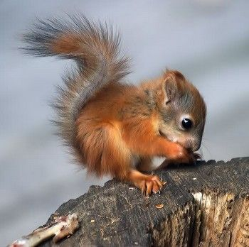 Cute baby squirrel #Baby Animals #cute baby Animals| http://best-cute-baby-animals-gallery.blogspot.com
