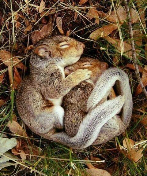 baby squirrel love!