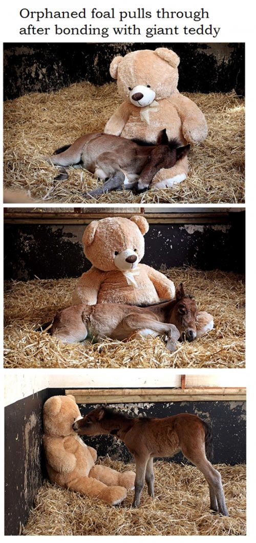 This is adorable! Colt horse pony teddy bear