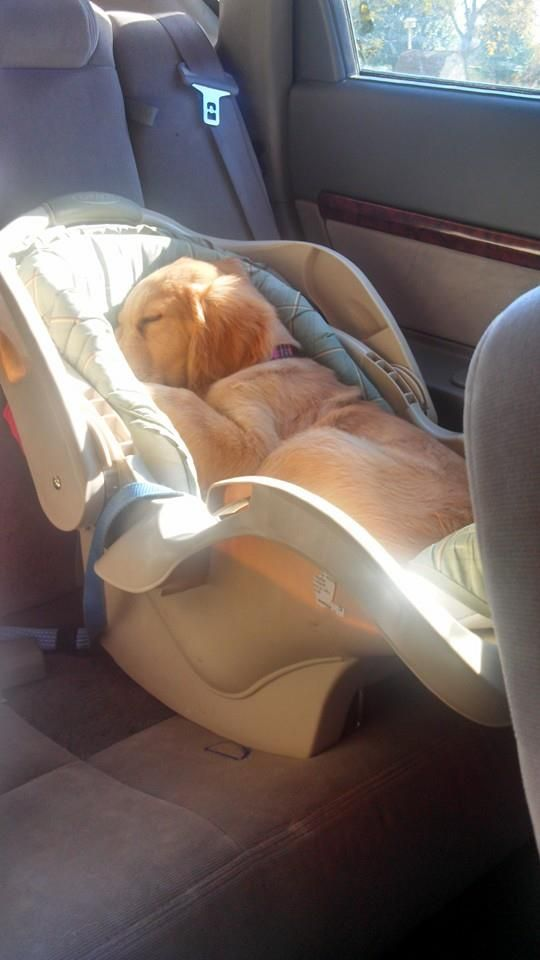 BABY SLEEPING IN SAFETY CHAIR IN CAR.