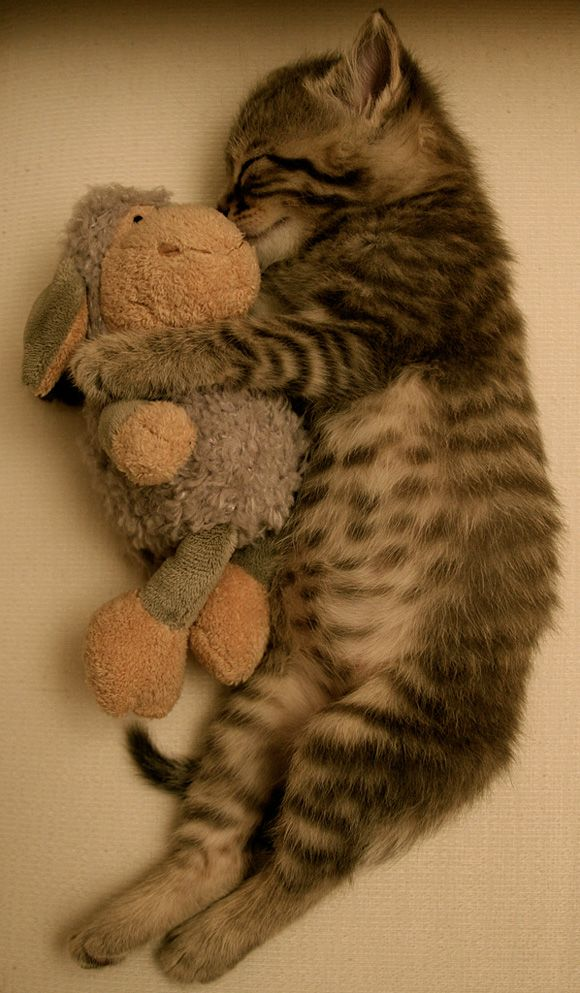 Sweet dreams. Spot has a lamby just like this one!!! So cute....