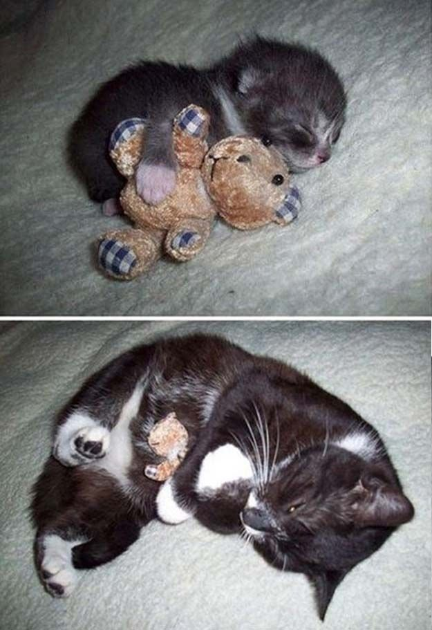 Got the teddy bear as a kitten.  Slept with it.  Grew into a cat.  Still sleeps with it.  Adorable!