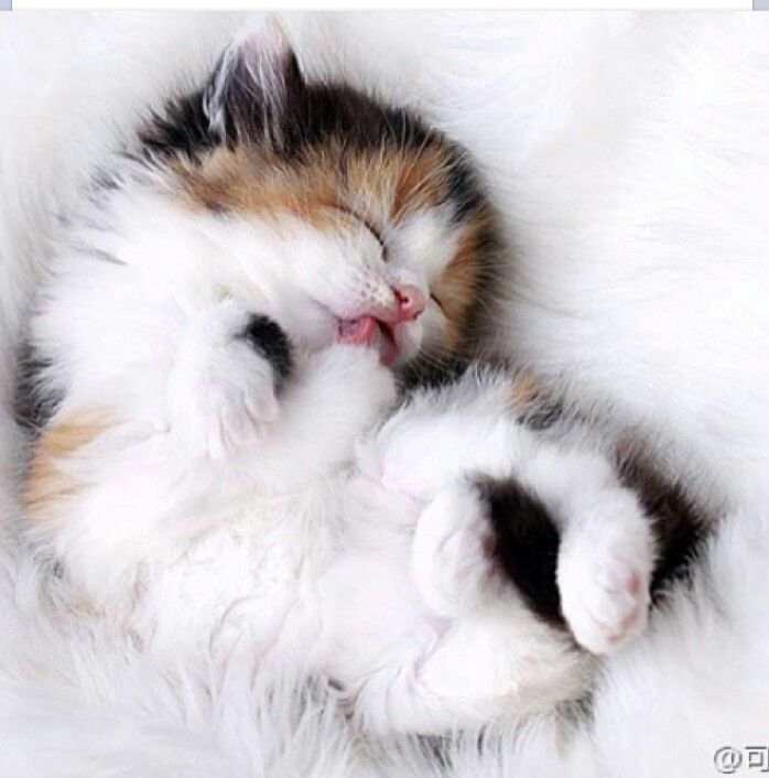 Sweet dreams of little kitty