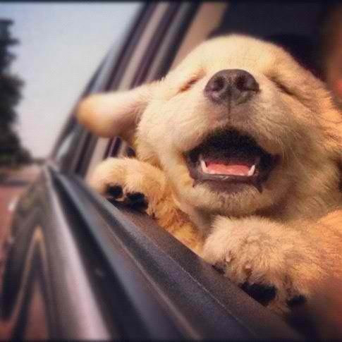 Happy puppy on a road trip!