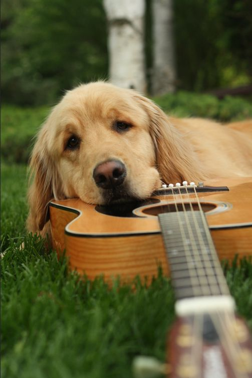 are you feeling blue? #dog #guitar