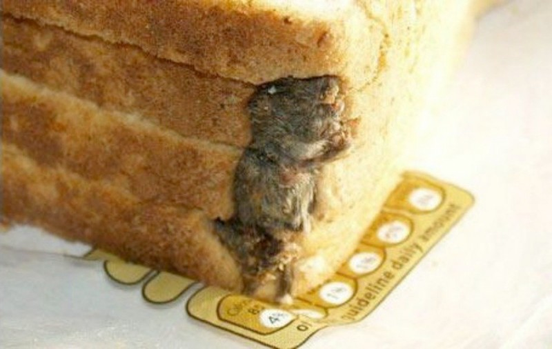 Stephen Forse found a mouse in his loaf of Hovis' sliced bread in 2009, while he was making sandwiches for his children.